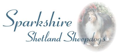 Welcome to Sparkshire Shetland Sheepdogs home on the web.  We hope you enjoy your visit and invite you to sign our guestbook!